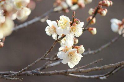 や と ひ 袖 ふ ち 立 春 くらむ を の むすび こ の て 風 つけ し 水 ほれる