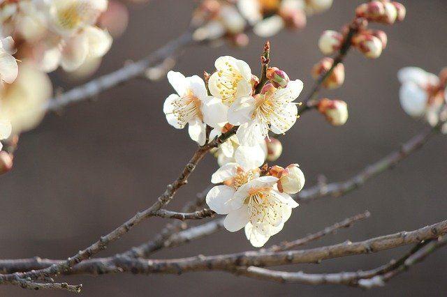 こ の を と 水 や 春 ふ つけ 立 むすび くらむ の て 風 袖 ほれる ひ ち し 古今和歌集「袖ひちてむすびし水の~」解説・品詞分解・現代語訳
